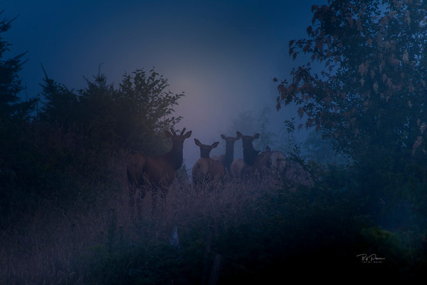 Elk Dawn Patrol