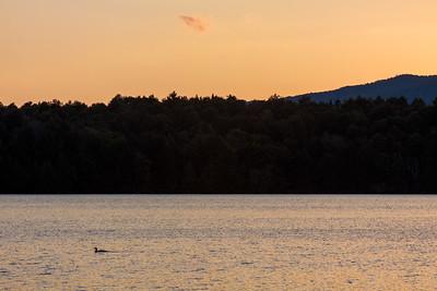 Loon Lake Loon