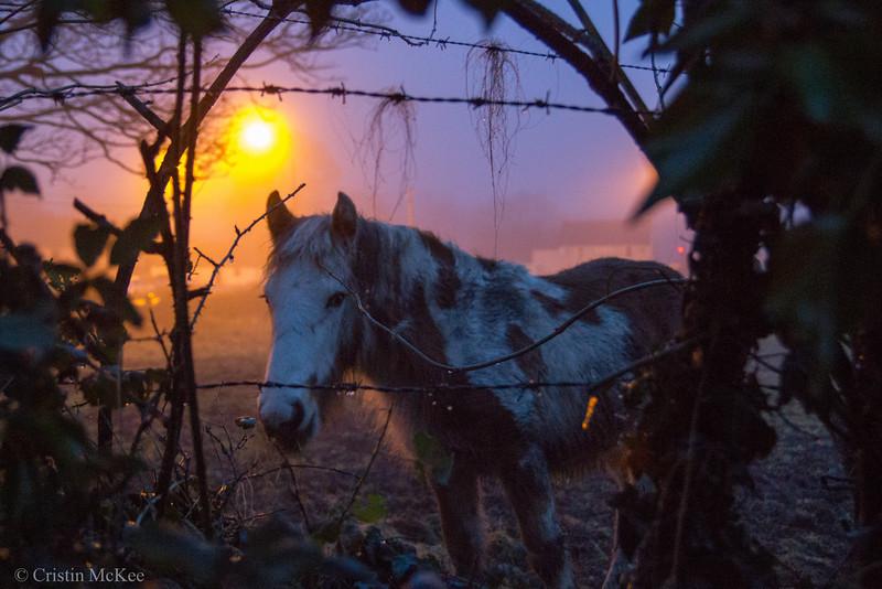 Horse in Irish Fog