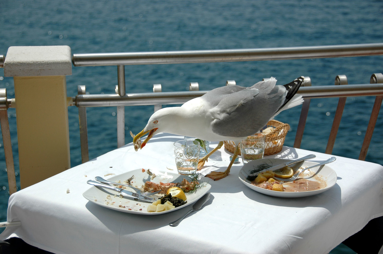 Rovinj-Gull stealing lunch-DSC_3580