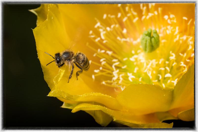 Cactus Blossom