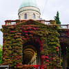The ivy at the cemetery gate turns bright red in the  autumn.  They say it glows at sunset.