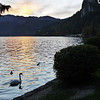 Swan and ducks, Lake Bled, Bled Castle, evening