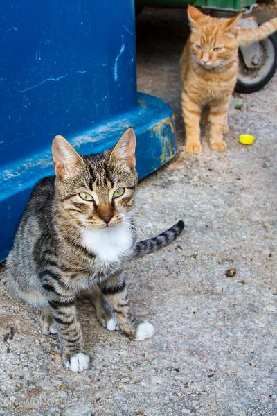 Some members of the Dubrovnik garbage cat gang defending their turf