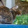 The zen member of the Dubrovnik garbage cat gang