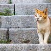 Sensitive cat along the steps leading uphill from the walls of Dubrovnik
