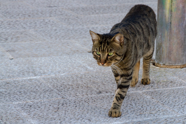 A standoff-ish cat at the Dubrovnik harbor... until food was proffered