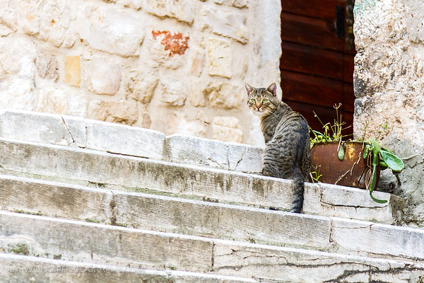 The other Sibenik cat