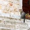 The other Sibenik cat