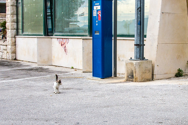 Semaphore kitty of Gradac