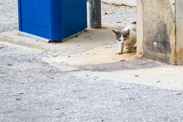 One of the more skittish Gradac kitties