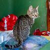 The dumpster-diving member of the Dubrovnik garbage cat gang