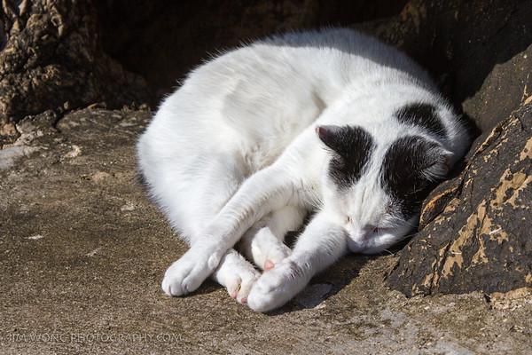 Sleepiest Dubrovnik pier cat