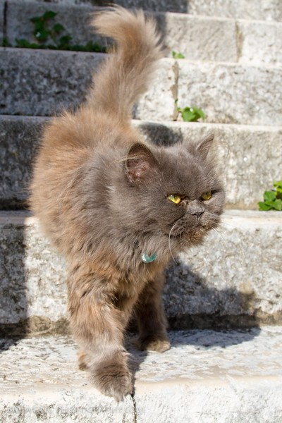 The only long-haired cat in Dubrovnik