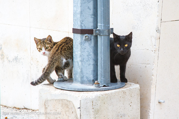 These two sentry kitties never left their post in Gradac