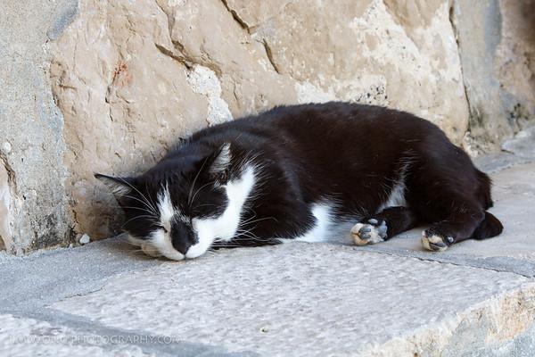 Sleepy Dubrovnik pier cat