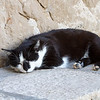 Sleepy Dubrovnik pier cat