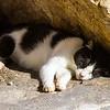 Sleepier Dubrovnik pier cat