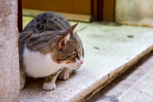 Resident cat of the Zadar pet store