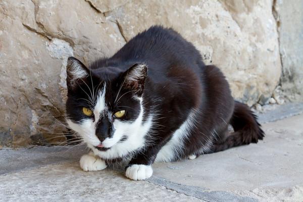 Food awakens sleepy Dubrovnik cat
