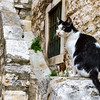 Sibenik has only two cats