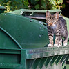 The muscle for the gang of Dubrovnik garbage cats