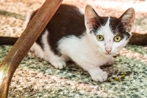 A kitten at the Zadar bazaar