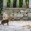 The first cat encountered on the steps leading up to an overlook of Split