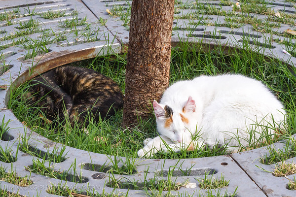 Split cats were among the least active along the Dalmatian coast