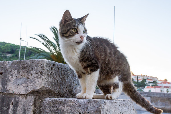 One of the few cats on Korcula