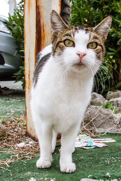 A curious cat from Split