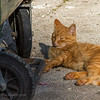 The lazy member of the Dubrovnik garbage cat gang