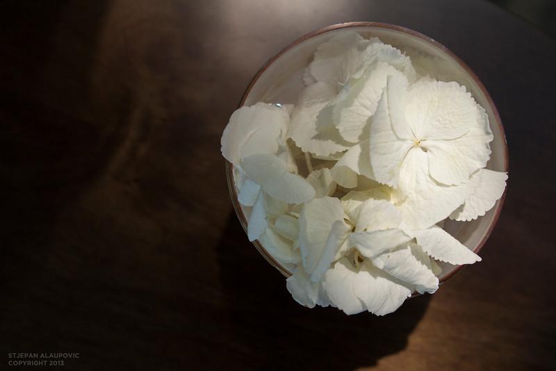 Flower Pot at Hotel Bellevue