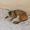 Tired Dubrovnik Cat