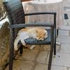 Sleepy Dubrovnik Cat