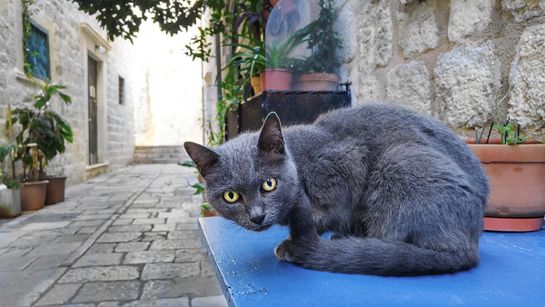 Cat in a street of Dubrovnik
