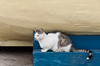 A young cat crouches underneath a boat hull along the Dalmatian Coast of Croatia.
