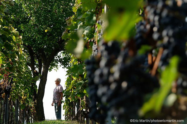 CROATIE. SLAVONIE. La ferme familliale MATIJEVIC ( portrait Matijevic Branko ) dans le village SUZA, connue pour la production de KULEN (saucisson au paprika ) et de vin.