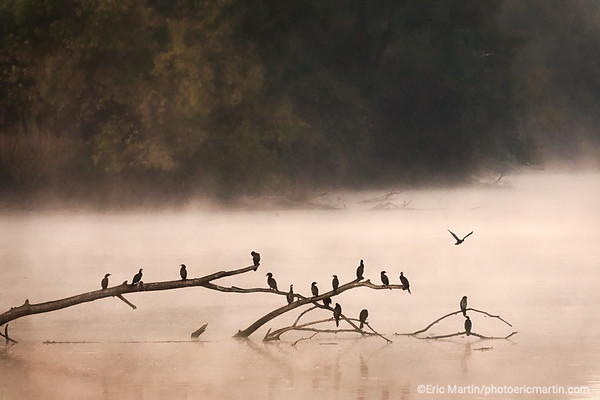 CROATIE. SLAVONIE. Parc naturel de Kopacki Rit