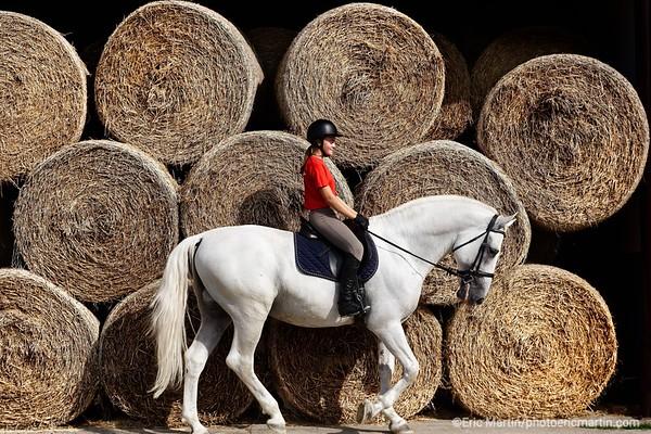 CROATIE. SLAVONIE. Haras des chevaux Lipizzans de Dakovo
