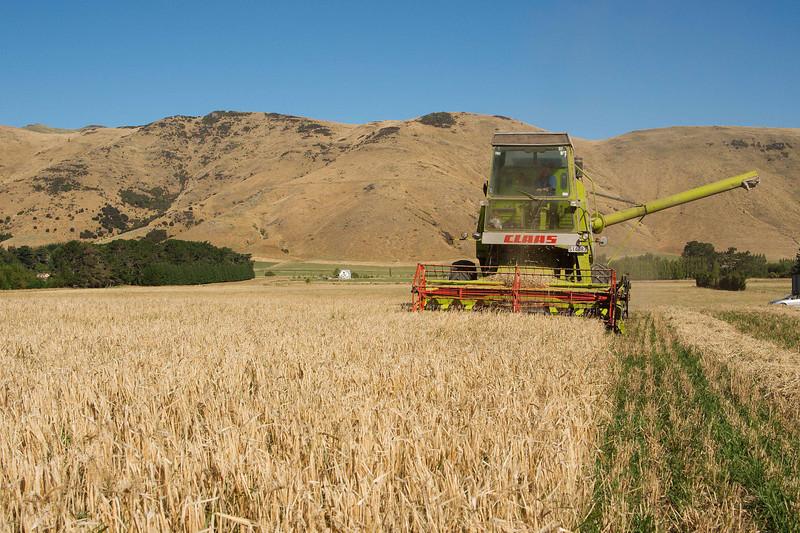 Barley McQueens Valley