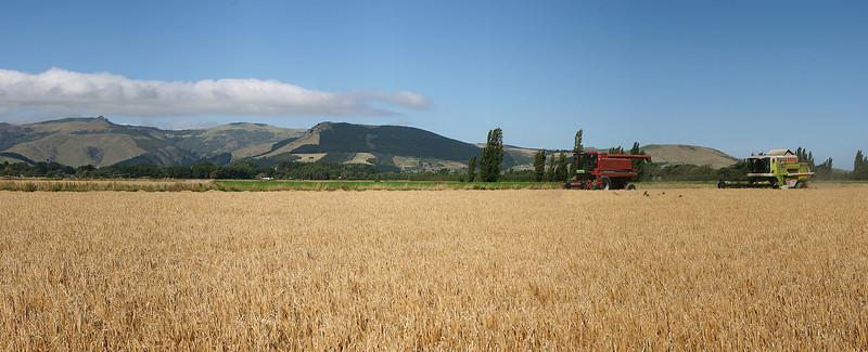 Barley Harvesting