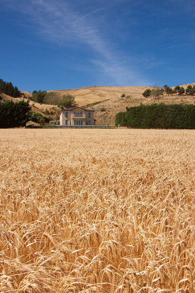 Barley at Otahuna
