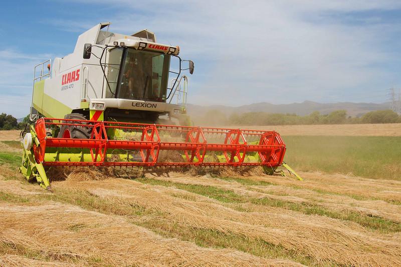 Harvesting Ryegrass Seed