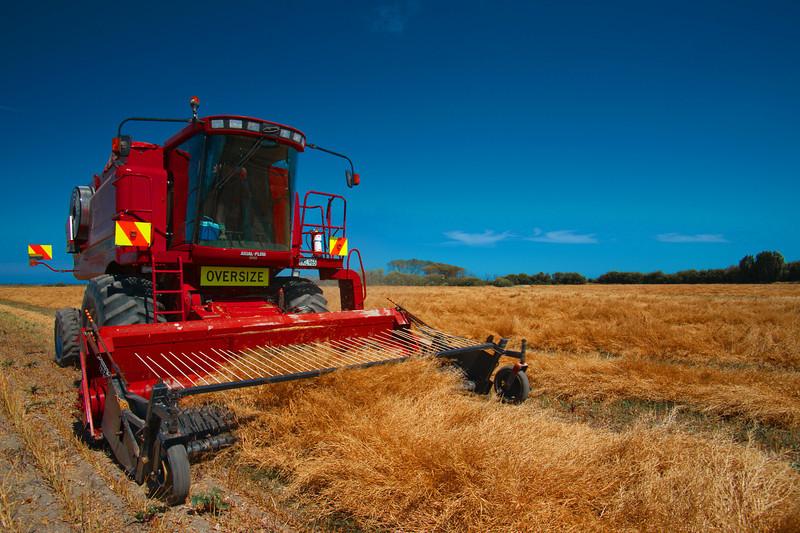 Brassica Harvesting