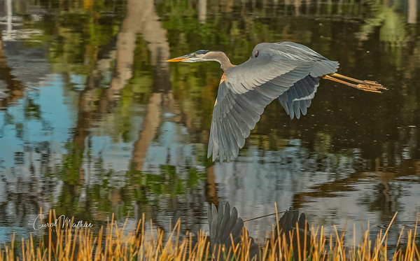 GBH wingtip reflection