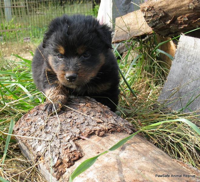 I can climb the woodpile too!