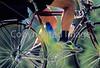 Cycle Oregon - 29a - 72 dpi