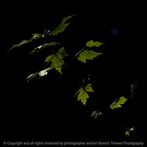 015-leaf-wdsm-20sep16-12x12-006-5857