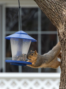 015-squirrel-wdsm-05mar17-09x12-001-7989